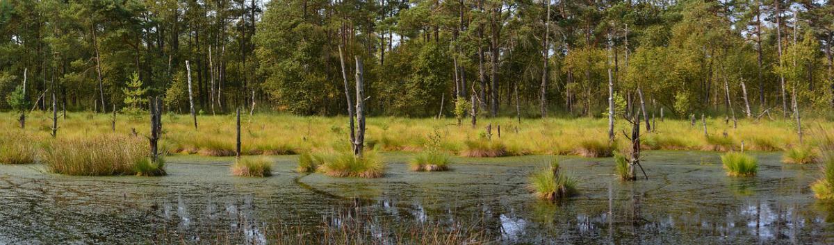 wetlandy